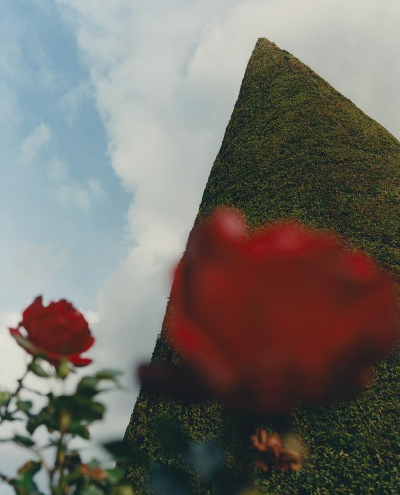 SB_FLOWERS_20